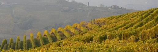 Fontanafredda Vineyard