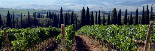 Giodo Vineyard